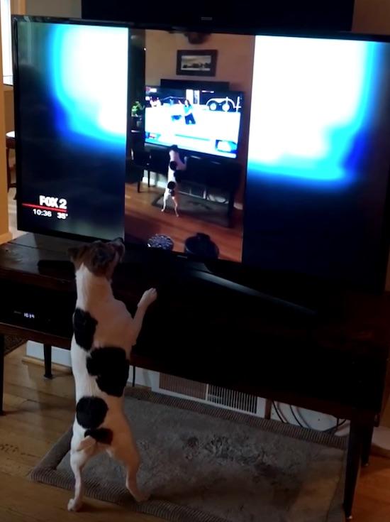 perro jugando con la tele