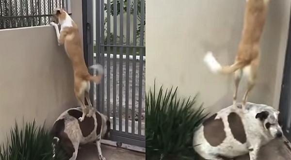 perros espiando