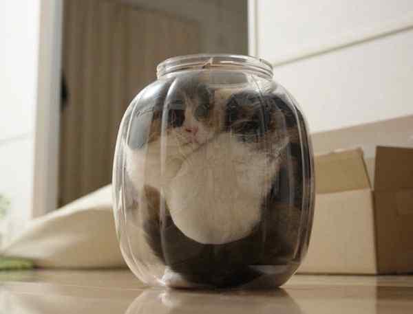 Gatos que se adaptan a cualquier recipiente como si fueran líquidos. 10