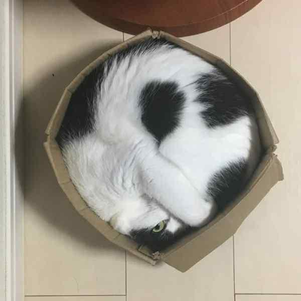 Gatos que se adaptan a cualquier recipiente como si fueran líquidos. 12