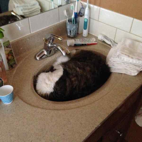 Gatos que se adaptan a cualquier recipiente como si fueran líquidos. 14