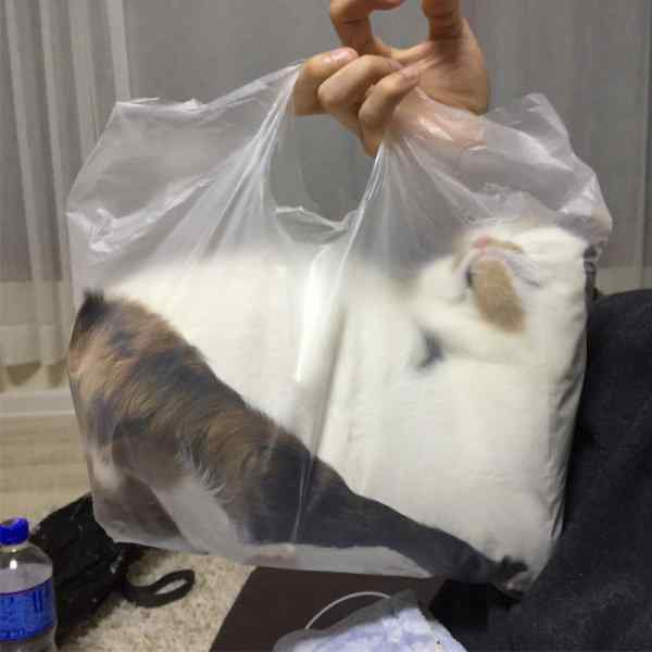 Gatos que se adaptan a cualquier recipiente como si fueran líquidos. 2