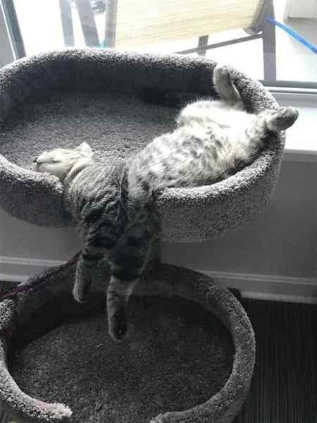Gatos que se adaptan a cualquier recipiente como si fueran líquidos. 3