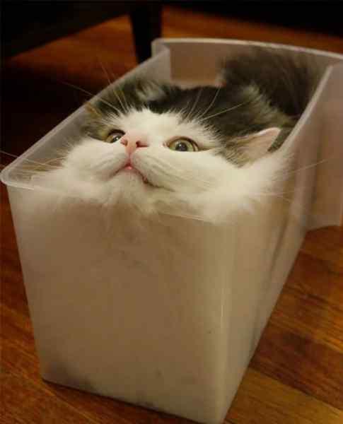 Gatos que se adaptan a cualquier recipiente como si fueran líquidos. 8