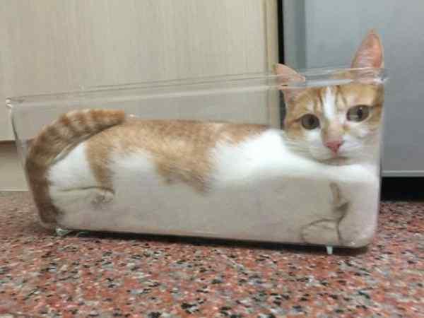 Gatos que se adaptan a cualquier recipiente como si fueran líquidos. 9
