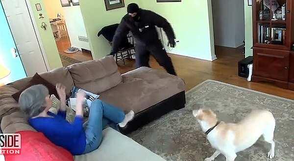 vídeos de animales, perros