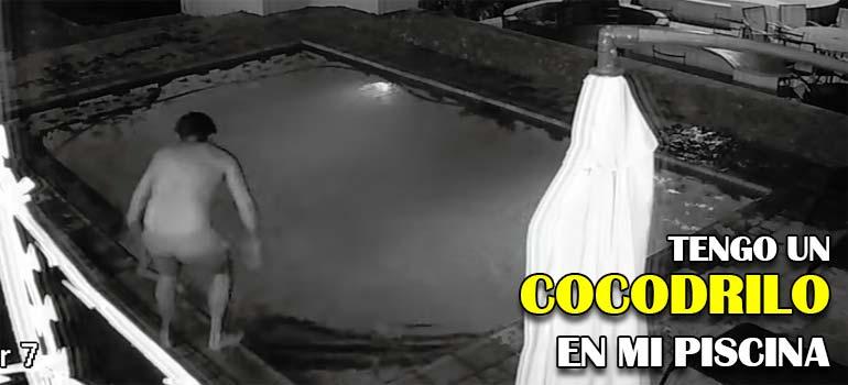 Un cocodrilo se mete en la piscina