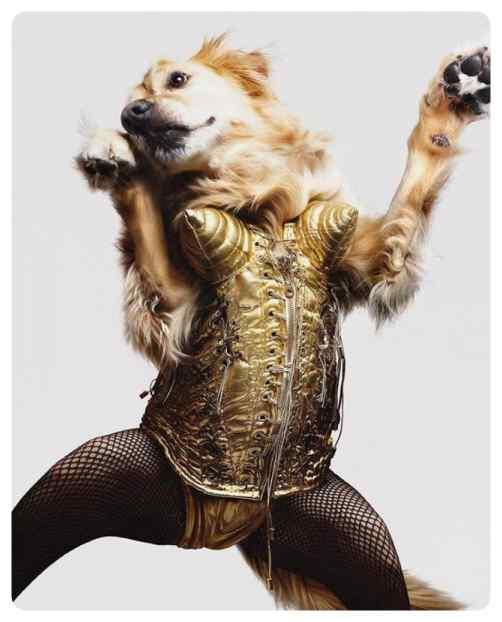 perro imita a madonna 03 - El perro que imita las portadas de Madonna.