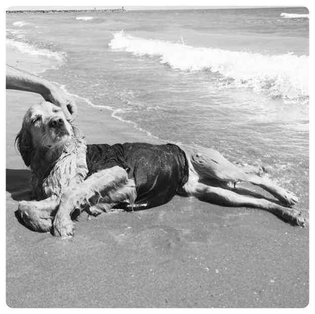 perro imita a madonna 07 - El perro que imita las portadas de Madonna.
