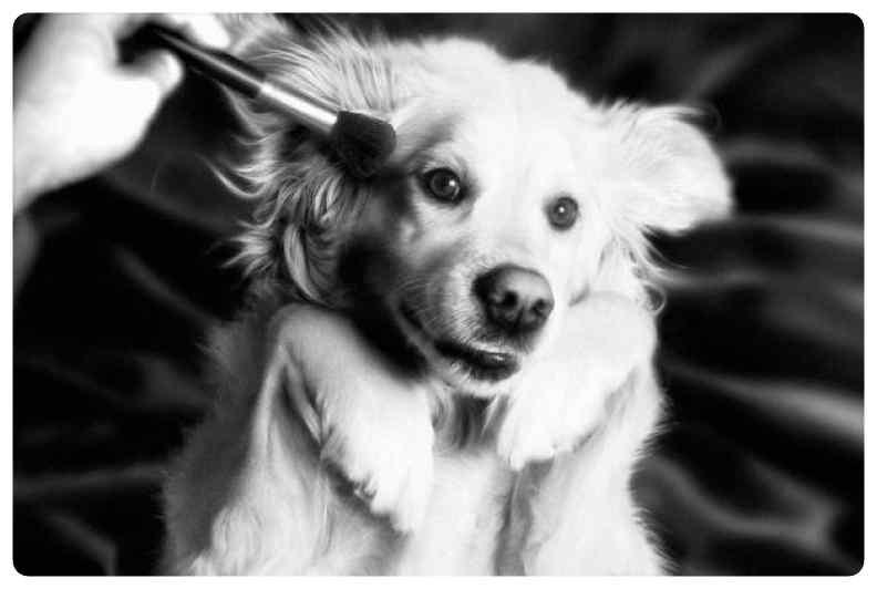 perro imita a madonna 09 - El perro que imita las portadas de Madonna.