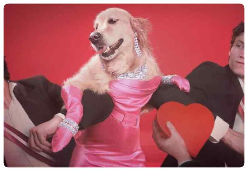 perro imita a madonna 13 - El perro que imita las portadas de Madonna.