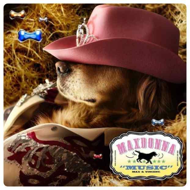 perro imita a madonna 19 - El perro que imita las portadas de Madonna.