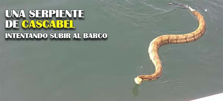se encuentran una serpiente de cascabel en el agua