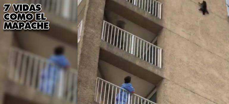 vídeo del mapache que cae de un edificio de nueve plantas