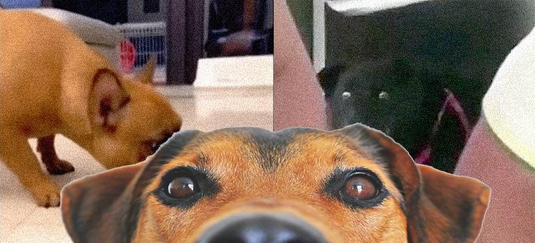 divertida reacción de unos perros