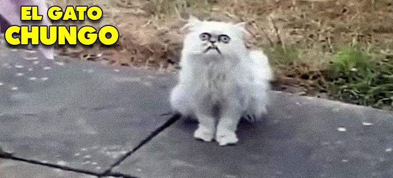 Mamá hay un gato muy chungo en tu patio... 7