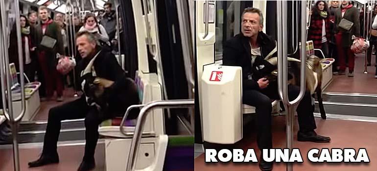 Roba una cabra y se la lleva en el metro. 2