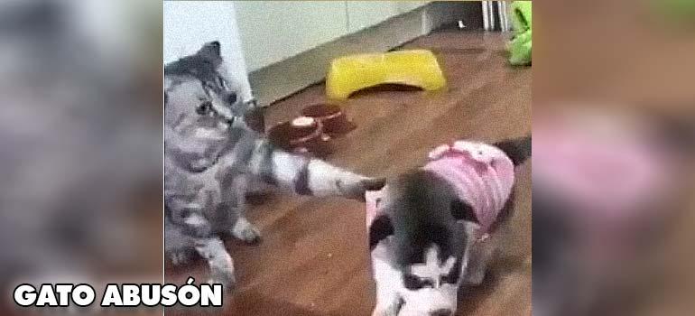 Este gato es un poco abusón con el pobre perrete. 13