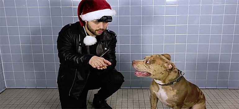 Trucos de magia para los perros de un refugio. 27