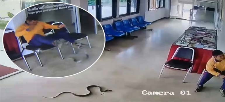 Es atacado por una serpiente mientas espera en una comisaria de policía. 5
