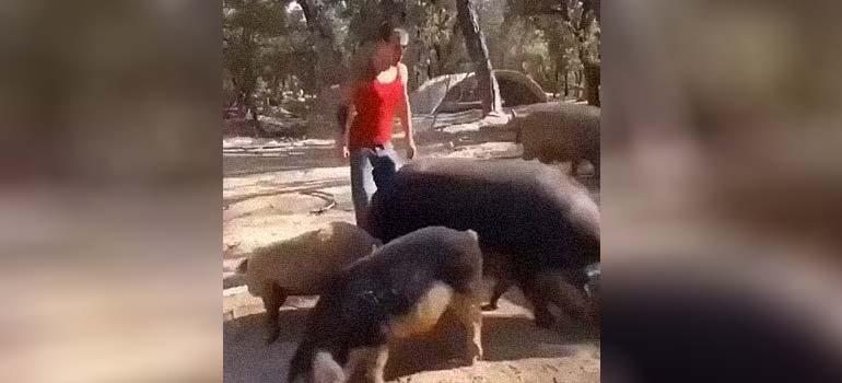 Para que quieres una moto si puedes tener un cerdo. 6