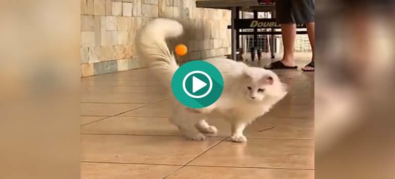 Un gato con muy pocos reflejos. 6