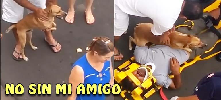 Vídeo de un perro que no quiere dejar que una ambulancia se lleve a su amo. 11