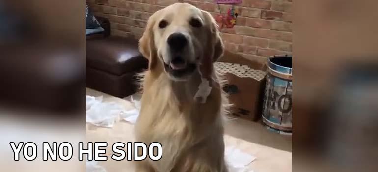 A este perro le pillan con las manos en la masa. 1