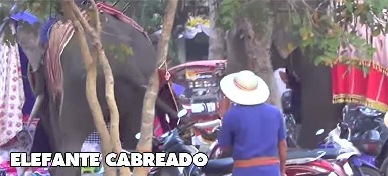 Dramáticos momentos cuando un Elefante ataca a todo el mundo. 2