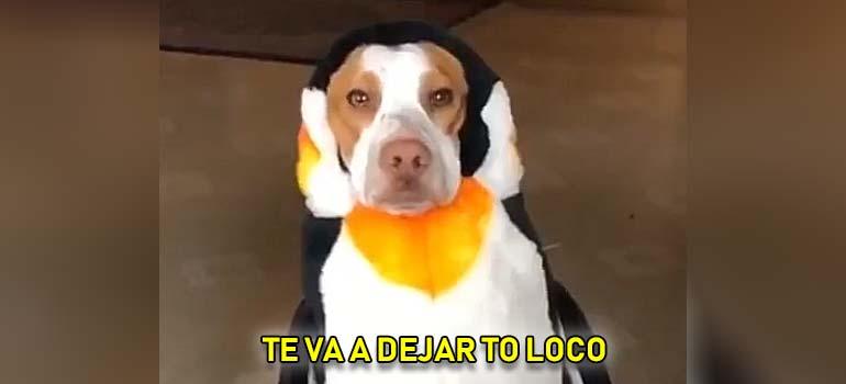 El vídeo de los perros disfrazados de pingüinos. 3