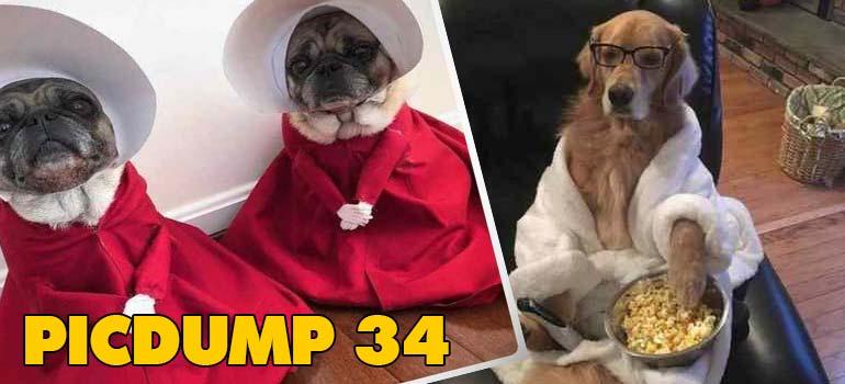 PicDump 34, imágenes chistosas que te pueden salvar del día. 4