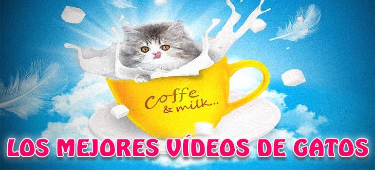 Vídeos de risa con gatos, los 10 mejores. 2
