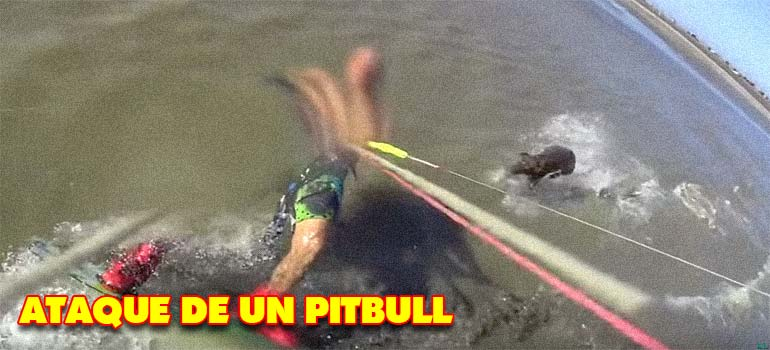ataque de un pitbull - Un Pitbull ataca a un hombre que practicaba kitesurf.