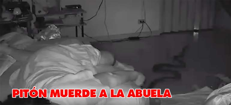 piton muerde abuela - Serpiente Pitón muerde a una abuela mientras dormía.