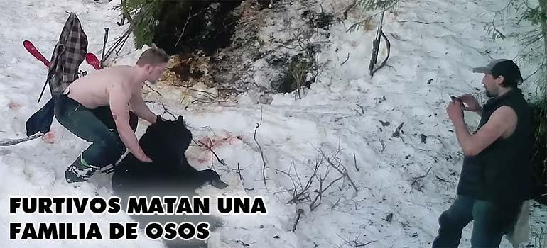 Dos cazadores furtivos matan a una familia de osos. 2