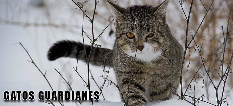 Quien necesita perros teniendo a estos gatos guardianes. 4