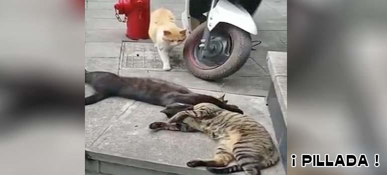 Gato infiel es pillado por su mujer con las manos en la masa. 11