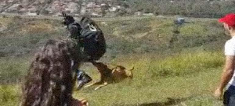 Perro ataca y se queda colgado de un parapente. 7