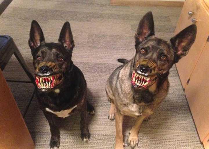 Este bozal convierte a tu perro en el más duro del barrio. 4