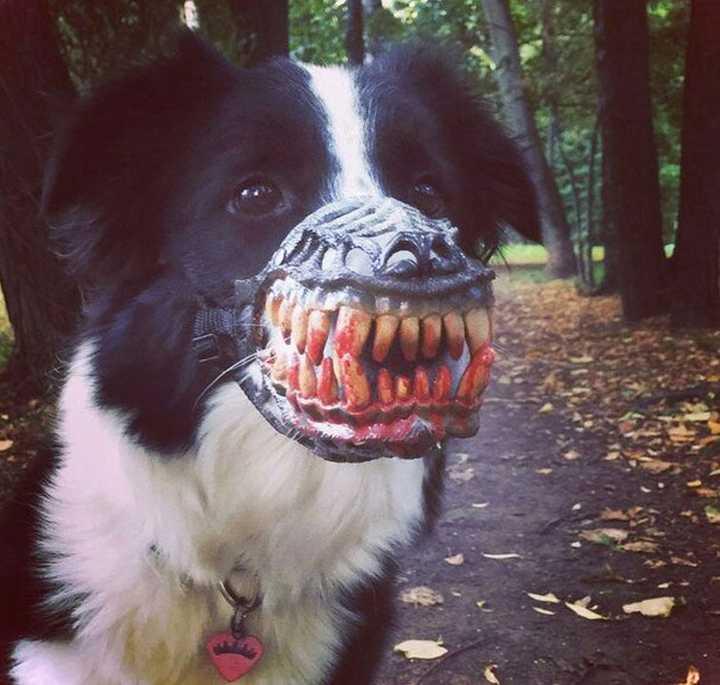 Este bozal convierte a tu perro en el más duro del barrio. 5