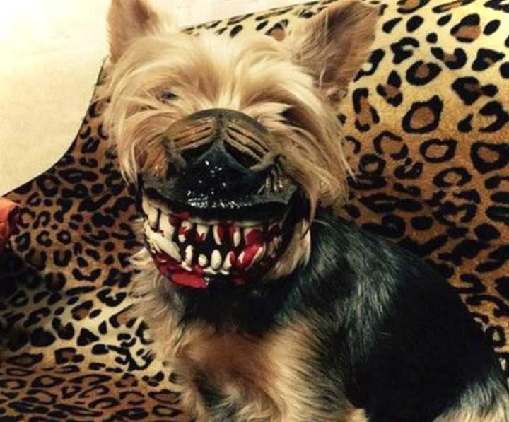 Este bozal convierte a tu perro en el más duro del barrio. 6