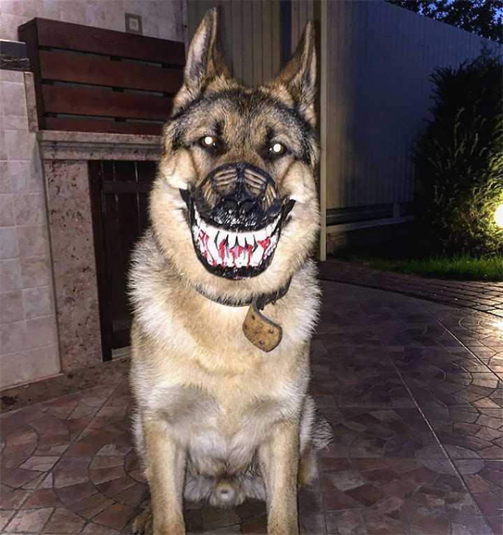Este bozal convierte a tu perro en el más duro del barrio. 2