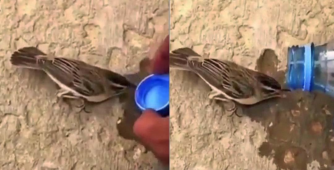 Intenta salvar a un pájaro deshidratado pero mira como termina... 17