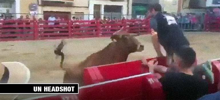 Toro golpea en la cabeza a un mozo que lo provoca. 3
