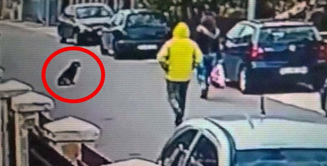 Un perro callejero ataca a un atracador que intentaba robar a una mujer. 17