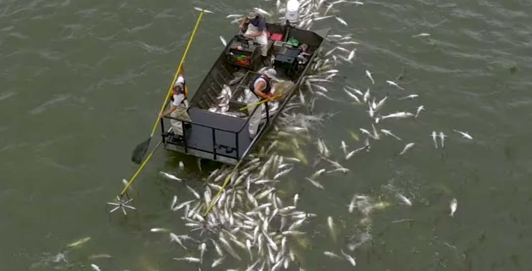 Pescando con la técnica de electrificar a los peces. 6