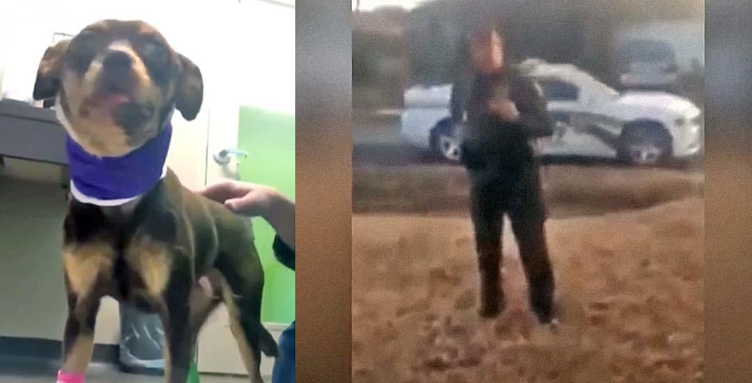 Policía dispara a un chihuahua en la cabeza y dice que ha sido en defensa propia. 5