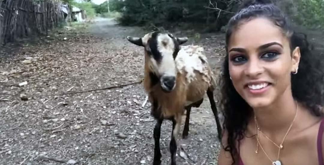 Intenta un selfie con una cabra y esta la pega un golpe en la cabeza. 12