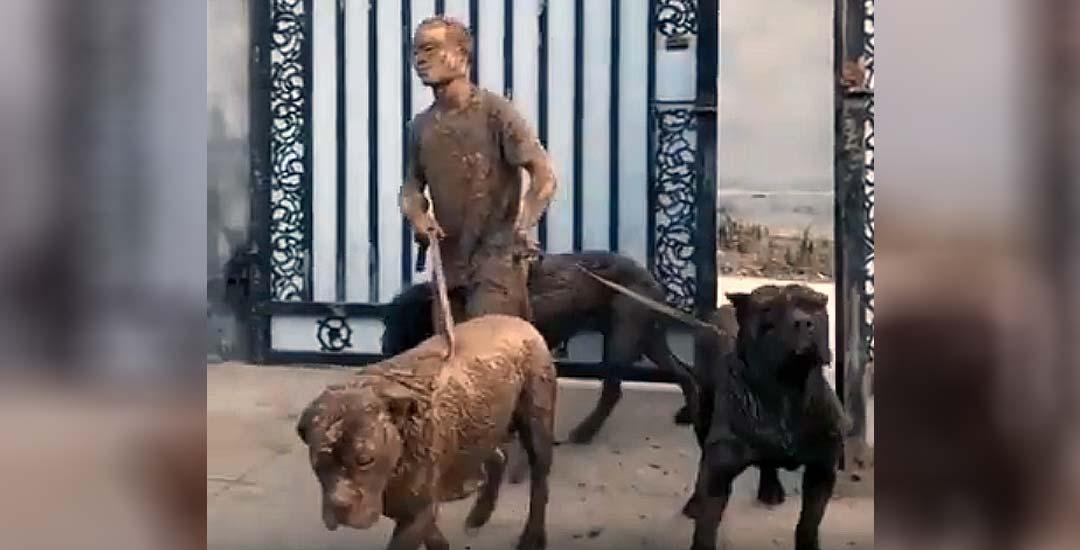 Vídeo de cuando vuelves de pasear a los perros. 9