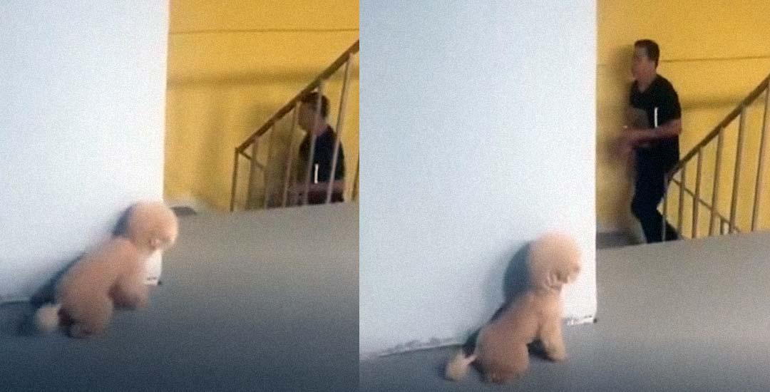 Divertido vídeo de un perro que se esconde para asustar a su dueño. 3